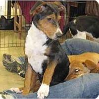 Adopt A Pet :: Molly - Alexandria, VA
