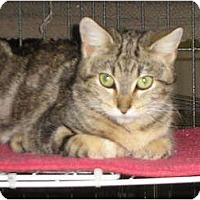 Adopt A Pet :: Melba - Brea, CA