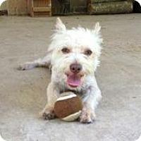 Adopt A Pet :: Timmy - Austin, TX