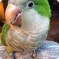 Adopt A Pet :: Vivian - Shawnee Mission, KS