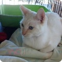 Adopt A Pet :: Frosty - La Canada Flintridge, CA