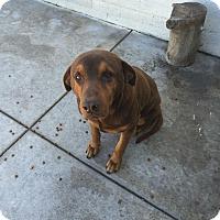 Adopt A Pet :: Johnny - Tracy, CA
