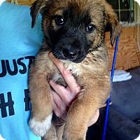 Adopt A Pet :: Brooks - Morgantown, WV