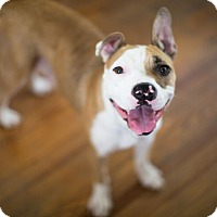 Adopt A Pet :: Remy - Reisterstown, MD