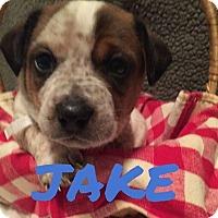 Adopt A Pet :: Jake - Rexford, NY