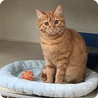 Adopt A Pet :: ROCKY - Hamilton, NJ