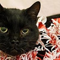 Adopt A Pet :: Smokey - Herndon, VA