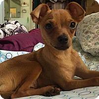 Adopt A Pet :: Teents - San Diego, CA