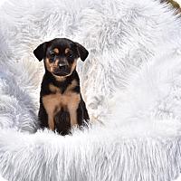 Adopt A Pet :: Cassatt - Groton, MA