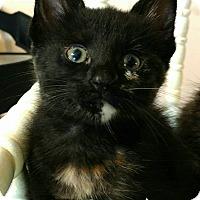 Adopt A Pet :: Izzy - Texarkana, AR