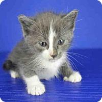 Adopt A Pet :: A025515 - Norman, OK