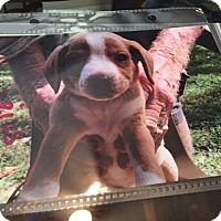 Adopt A Pet :: Aquarius - Hohenwald, TN