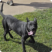 Labrador Retriever Mix Dog for adoption in Sedan, Kansas - Abby