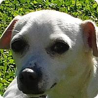 Adopt A Pet :: Peaches - MINNEAPOLIS, KS