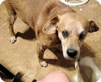 Golden Retriever Mix Dog for adoption in Rutherfordton, North Carolina - Louie