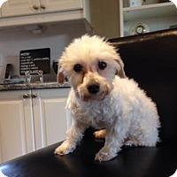 Adopt A Pet :: Nelson 3404 - Toronto, ON