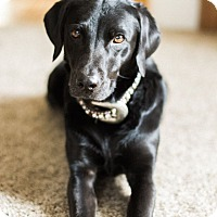 Adopt A Pet :: Sage - Heber City, UT