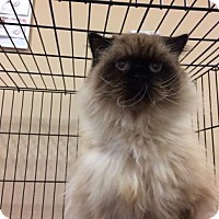 Adopt A Pet :: Yetti - Cumming, GA