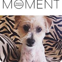 Adopt A Pet :: Rito - Las Vegas, NV