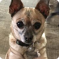 Adopt A Pet :: Candy - San Marcos, CA