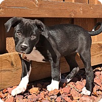 Adopt A Pet :: Frida - Flower Mound, TX