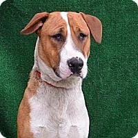 Adopt A Pet :: GUNTHER - Encino, CA