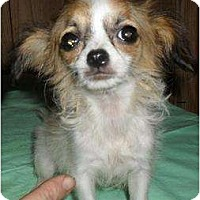 Adopt A Pet :: Precious - Chandlersville, OH