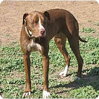 Adopt A Pet :: Lucky - Courtesy Post - Scottsdale, AZ