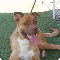 Adopt A Pet :: Duke - Corona, CA