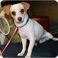 Adopt A Pet :: Juno - Gilbert, AZ