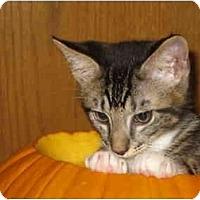 Adopt A Pet :: Buzz - Davis, CA