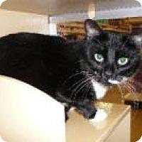 Adopt A Pet :: KC - Springfield, PA