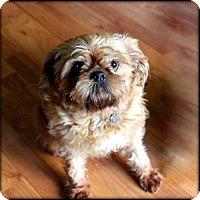 Adopt A Pet :: KEEYA - ADOPTION PENDING - Seymour, MO