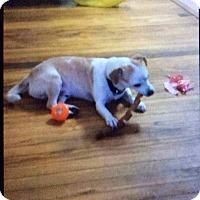 Adopt A Pet :: Coco - S. Pasedena, FL