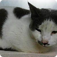 Adopt A Pet :: Tulip - Springdale, AR