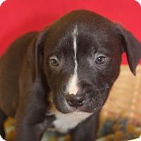 Adopt A Pet :: Cindy - Waldorf, MD