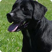 Adopt A Pet :: Sammy - Trenton, MO