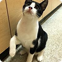 Adopt A Pet :: Ryan - Houston, TX