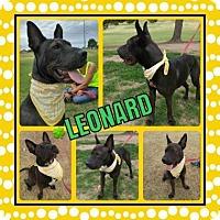 Adopt A Pet :: Leonard - Scottsdale, AZ