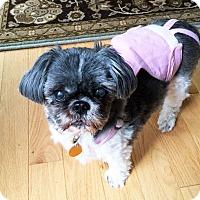 Adopt A Pet :: Trudy - Sudbury, MA