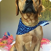 Labrador Retriever Mix Dog for adoption in Waterbury, Connecticut - JETHRO