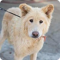 Adopt A Pet :: Fozzy Bear - Fresno, CA