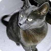 Adopt A Pet :: Missy - Novato, CA