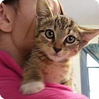 Adopt A Pet :: Lana - Windsor, CT