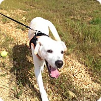 Adopt A Pet :: Andy - Lexington, TN