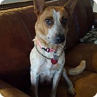 Adopt A Pet :: Ru - Denver, CO