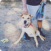 Adopt A Pet :: Ella *Courtesy Listing - Los Angeles, CA
