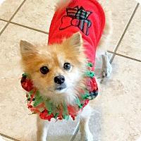 Adopt A Pet :: Lexus - conroe, TX