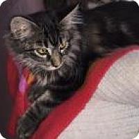 Adopt A Pet :: Loki - Sedalia, MO