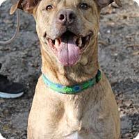 Adopt A Pet :: Duster - Gainesville, FL